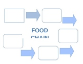 Food Chain Graphic Organizer