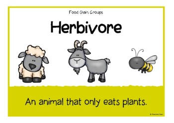 Food Chain Groups