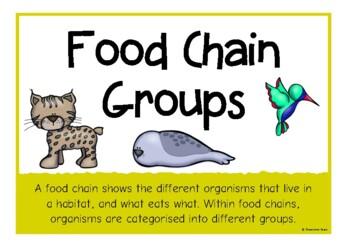 Food Chain Groups