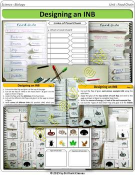Food Chain Interactive Notebook