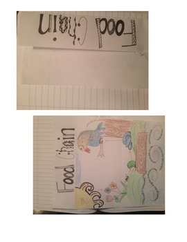Food Chain Journal Notes