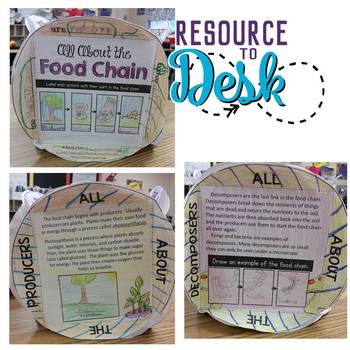Food Chain Knowledge Box