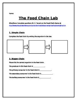 Food Chain Lab