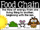 Food Chain Link Project and Vocabulary Posters