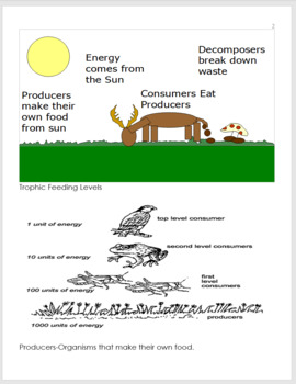 Food Chain Notes, Ecology Feeding Levels Unit Notes, Curriculum and Standards