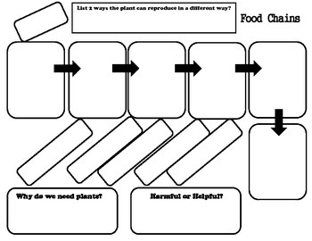 Food Chain Organizer