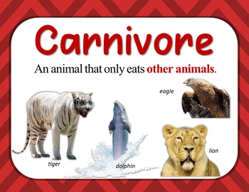 Food Chain Teaching Resources - {Posters and Word Wall Cards}