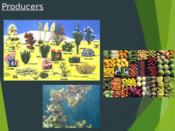 Food Chain PowerPoint
