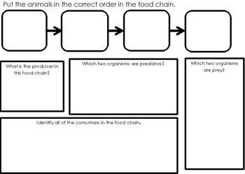 Food Chain Practice