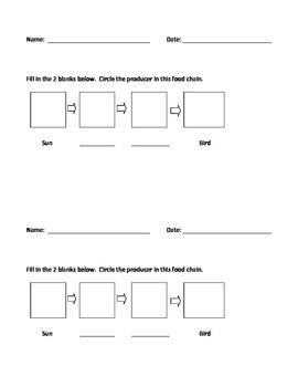 Food Chain Practice Sheet