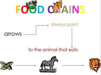 Food Chain (Pre-K, K, Grades 1-8) - To Brainstorm - For thinkers