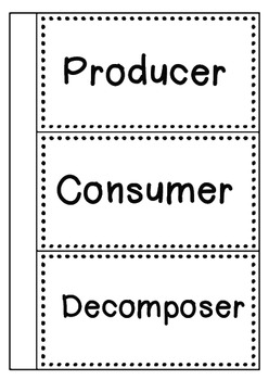 Food Chain Sort: Producer, Consumer, and Decomposer