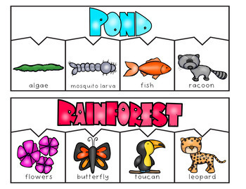 Food Chain Puzzles