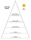 Food Chain Pyramid