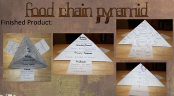 Food Chain Pyramid w/ Template