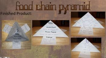 Food Chain Pyramid w/ Template