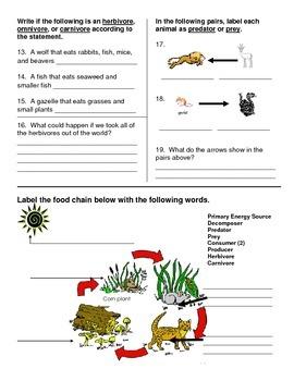 Food Chain Quiz