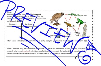 Food Chain Review Worksheet