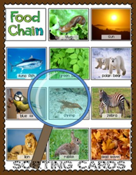 Food Chain Sorting Cards