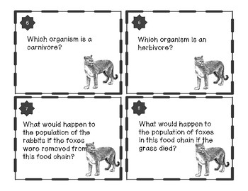 Food Chain Task Cards