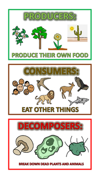 Food Chain Visual Glossary