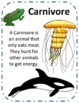 Food Chain Vocabulary, Notes, and Extension Activities