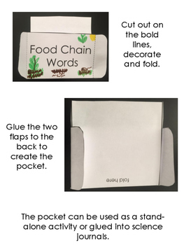 Food Chain Vocabulary Pocket Activity with Definition and Word Wall Cards