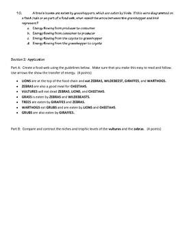 Food Chain, Web, Energy Pyramid Quiz (Form B)