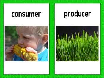 Food Chain Vocabulary Visual Word Wall