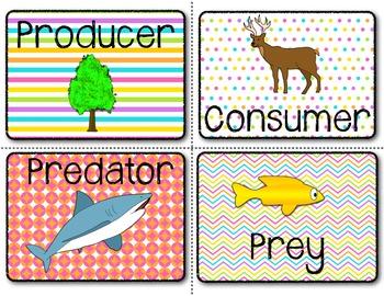 Food Chain Word Wall Kit