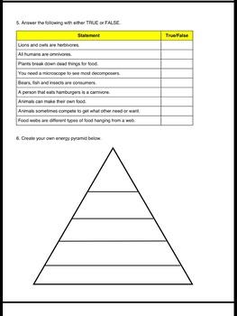 Food Chain Worksheet