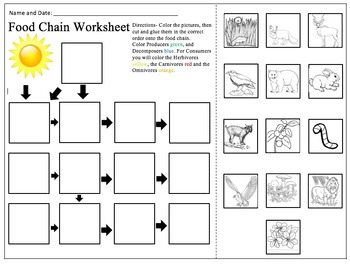 photograph regarding Food Chain Printable Activities identified as Food stuff Chain Worksheets Instructors Shell out Lecturers