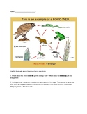 Food Chain Writing Piece