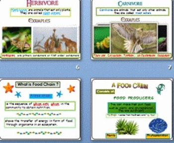 Food Chain and Food Web Power Point Presentation