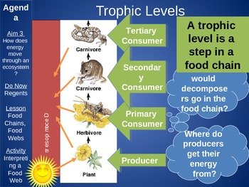 Food Chain and Food Web Ppt Lesson