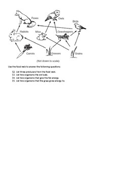 Food Chain and Food Web Quiz