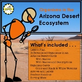 Food Chain and Food Web of an Arizona Desert