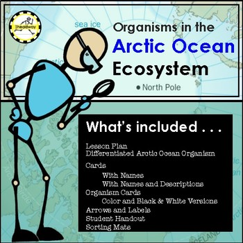 Food Chain and Food Web of the Artic Ocean