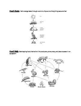 Food Chain/Food Web