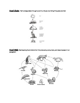 Food Chain/Food Web