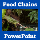 Food Chain Activity   Food Chain PowerPoint