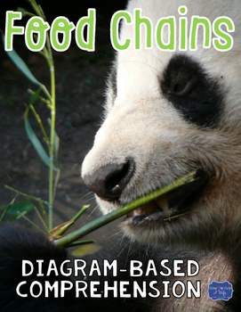 Food Chains Diagram & Comprehension Questions