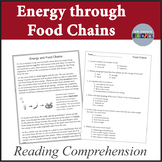 Food Chains Ecology Reading Comprehension