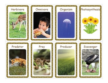 Food Chains Flashcards