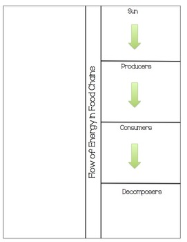 Food Chains- Flow of Energy (Sun, Producer, Consumer, Decomposer)
