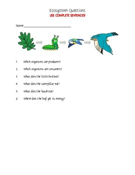 Food Chains & Food Web Questions