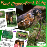 Food Chains - Food Webs