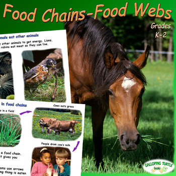 Food Chains - Food Webs