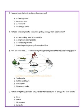 Food Chains & Food Webs ASSESSMENT  4th Grade Science