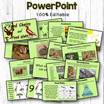 Food Chains & Food Webs Interactive Notebook, Editable PowerPoint, Printables